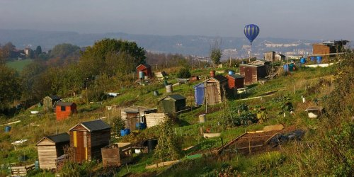 Perrett's Park allotments + balloon